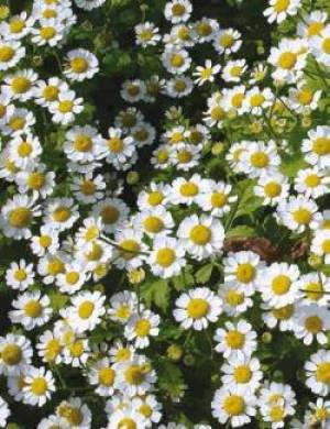 Peeling ziołowy – wybrane zagadnienia